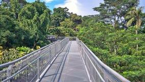 Promenade de forêt, Singapour photographie stock libre de droits
