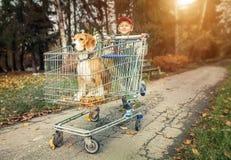 Promenade de garçon avec le chien dans la traînée d'achats Photo stock