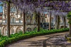 Promenade de glycine au palais de Bussaco, Portugal images libres de droits