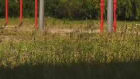 Promenade de jambes d'enfants sur la route d'herbe verte banque de vidéos