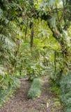 Promenade de jungle images stock