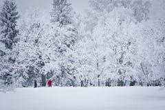 Promenade de l'hiver images stock