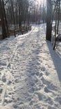Promenade de l'hiver photo libre de droits
