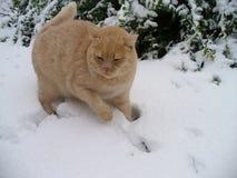 Promenade de l'hiver Photographie stock libre de droits