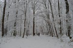 Promenade de l'hiver Image stock