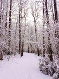 Promenade de l'hiver Photos libres de droits