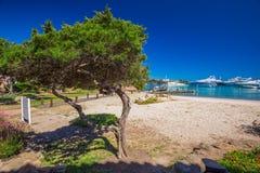 'promenade' de la costa costa con los árboles de pino y agua clara del tourquise en Oporto Cervo, Costa Smeralda, Cerdeña, Italia fotografía de archivo libre de regalías