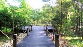 'promenade' de madera del camino en el bosque almacen de metraje de vídeo