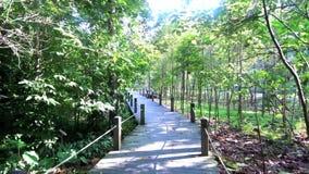 'promenade' de madera del camino en el bosque metrajes