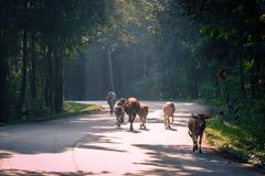 Promenade de matin Photo stock
