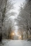 Promenade de Milou Images stock