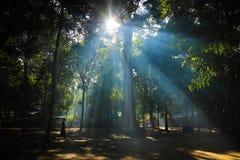 Promenade de moine dans le temple de forêt en couleurs Image stock