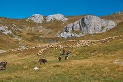 Promenade de montagne en Roumanie images libres de droits