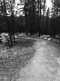Promenade de nature photographie stock libre de droits