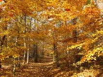 Promenade de nature d'automne image libre de droits