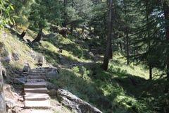 Promenade de nature dans de beaux arbres verts sur une traînée de montagne images stock