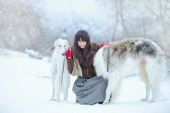 Promenade de Noël La belle femme étonnée en hiver vêtx avec le fond gracieux d'hiver de chiens de lévrier avec la neige, émotions Photo stock