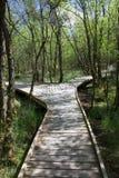 Promenade de panneau de forêt Images libres de droits
