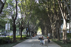 Promenade de parc à dans la ville urbaine Photo libre de droits
