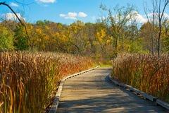 Promenade de pré dans l'automne en retard Photographie stock libre de droits
