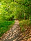 Promenade de régfion boisée Photo libre de droits
