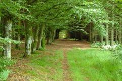 Promenade de régfion boisée Image stock