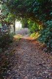 Promenade de région boisée Photographie stock