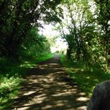 Promenade de région boisée Images libres de droits
