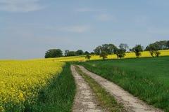 Promenade de source Image libre de droits