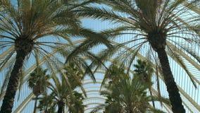 Promenade de Steadicam le long d'allée de palmiers un jour ensoleillé d'été, vue d'angle faible Valence, Espagne banque de vidéos