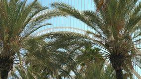 Promenade de Steadicam le long d'allée de palmiers un jour ensoleillé, vue d'angle faible banque de vidéos