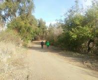Promenade de traînée Photo stock