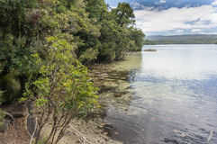Promenade de Waikareiti de lac Te Urewera National Park photographie stock libre de droits