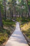 Promenade door de duinen aan de kust van de Golf van Riga stock afbeelding