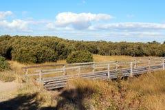Promenade door de Witte Kolonie van de mangrove Stock Afbeeldingen
