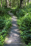 Promenade door groen varen-behandeld bos Royalty-vrije Stock Foto's