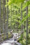 Promenade door lange bomen in moeras Stock Foto