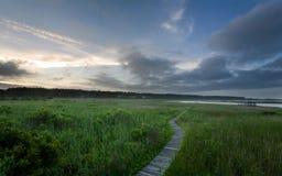 Promenade door moeras Stock Fotografie