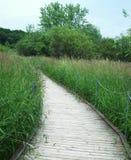 Promenade door moerasland royalty-vrije stock foto's