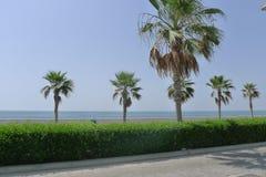Seaside walkway in Dubai. Walkway with palms, walkway with palm, seaside walkway in Dubai, seaside promenade, walkway along the beach in Dubai, UAE Stock Photography