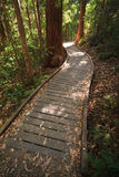 Promenade durch den Regenwald Stockfotos