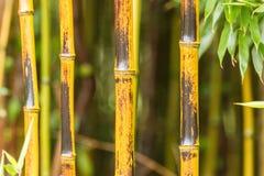 Promenade en bambou Photo libre de droits