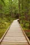 Promenade en bois Photo stock