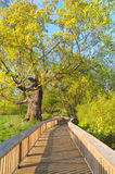 Promenade en bois photographie stock