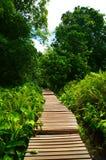 Promenade en bois Image stock