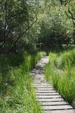 Promenade en bois dans la forêt Photographie stock libre de droits