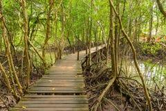 Promenade en mangrovebos Royalty-vrije Stock Afbeeldingen