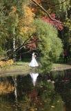 Promenade en parc en automne R?flexion dans l'eau Jeune mari?e photo stock