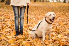 Promenade en parc d'automne Image libre de droits