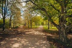 'promenade' en un parque hermoso de la ciudad imagen de archivo libre de regalías
